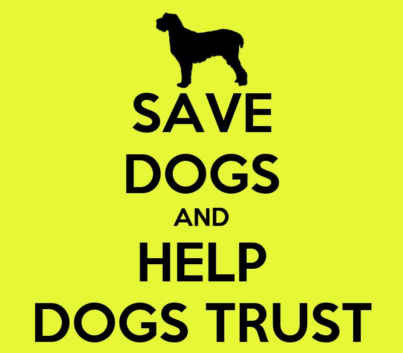 Dog Travel Products Uk