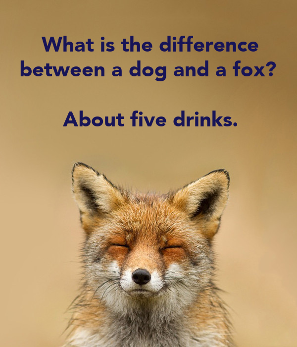 Difference Between Fox And Coyote: What-is-the-difference-between-a-dog-and-a-fox-about-five
