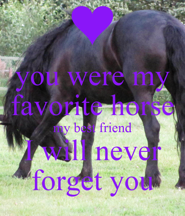 you were my favorite horse my best friend i will never
